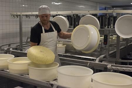 Terschellinger Käse